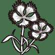 植物 なでしこ(モノクロ)