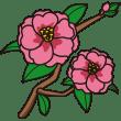 植物 サザンカ(ピンク色)(カラー)