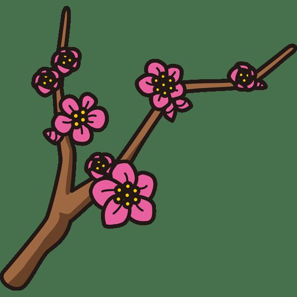 植物 梅(カラー)