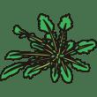 植物 ホトケノザ(カラー)