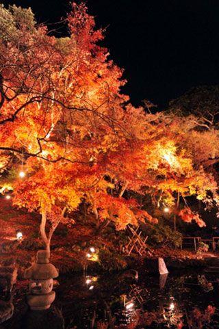 鎌倉 長谷寺の写真2