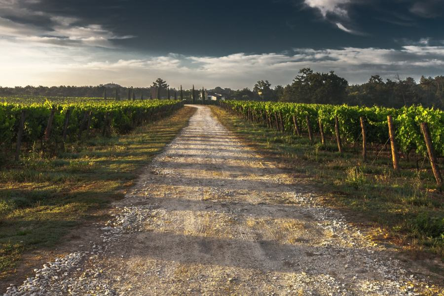 country-lane-428039