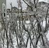 Screen Shot 2012-12-31 at 11.29.25 AM