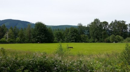 Three Forks Off-Leash Dog Park in Snoqualmie.