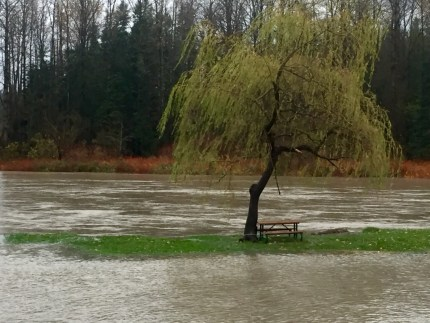 Sandy Cove Park in Snoqualmie