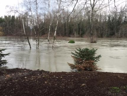 Sandy Cove Park in downtown Snoqualmie around 12PM, 12/9/15