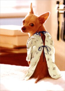 dog gown