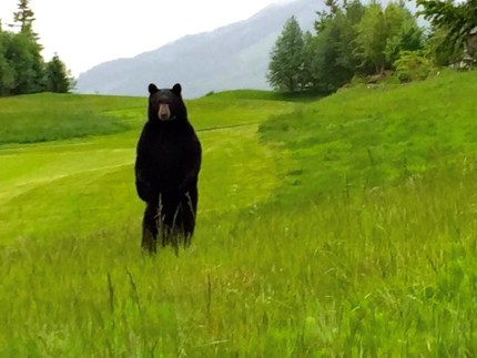 bear 11th hole