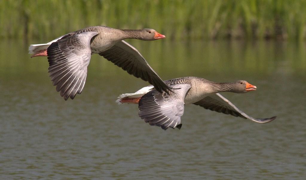 ワイズルーム 渡り鳥