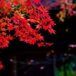 【天体観測に行こう!】秋の星座をご紹介!秋の星空を堪能しよう!【9月 10月 11月 編】