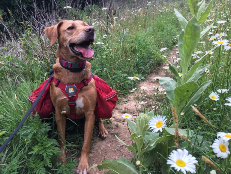 Trail etiquette includes staying on the trail to prevent damaging flowers, plants and animal homes.