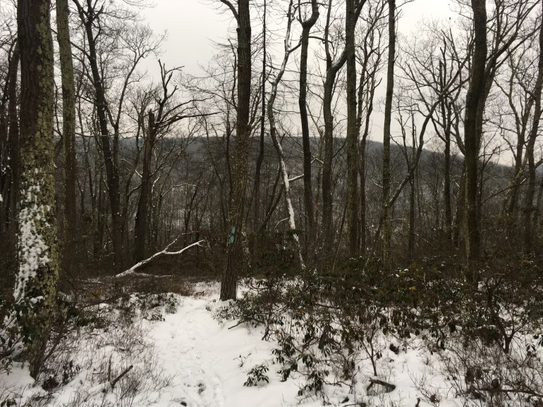 Stark trees stand out against the white snowy trail and the snow covered neighboring mountain