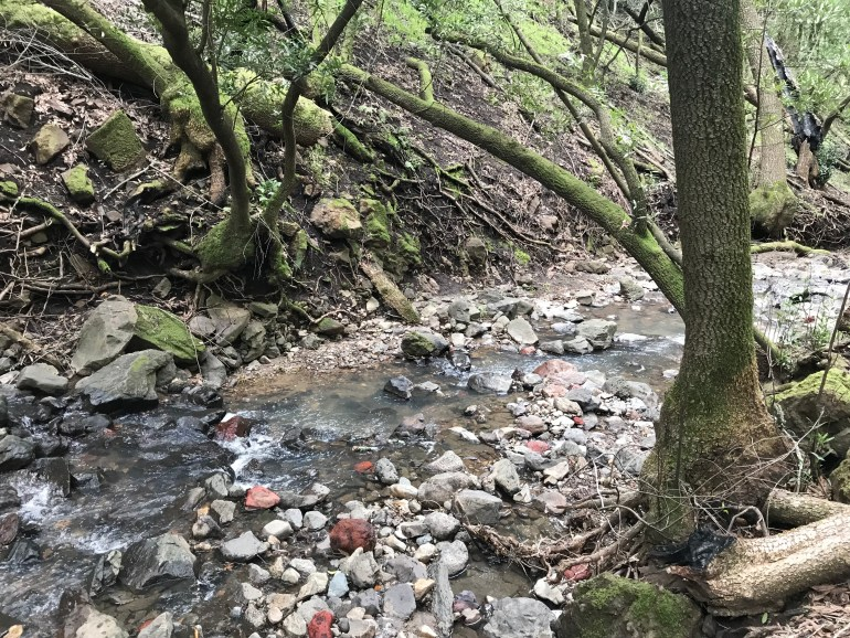 A rocky stream bordered by mossy trees