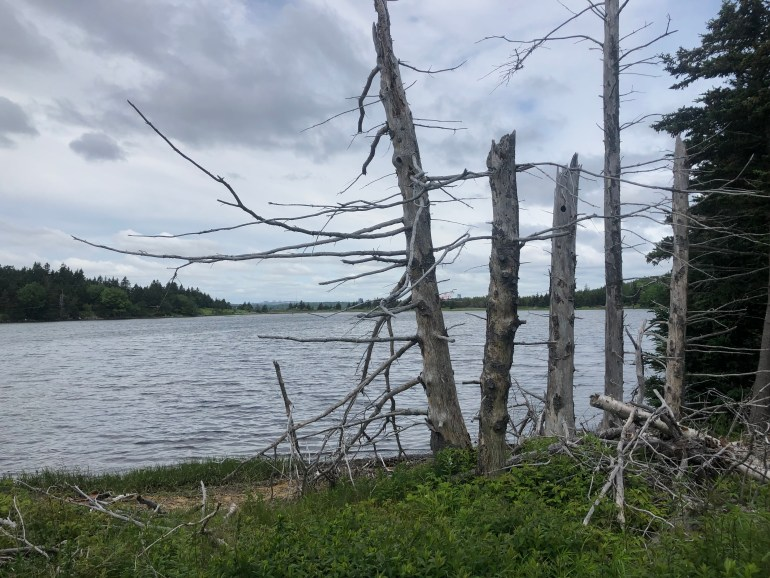 Tree skeletons stand in front of a gray cove of water