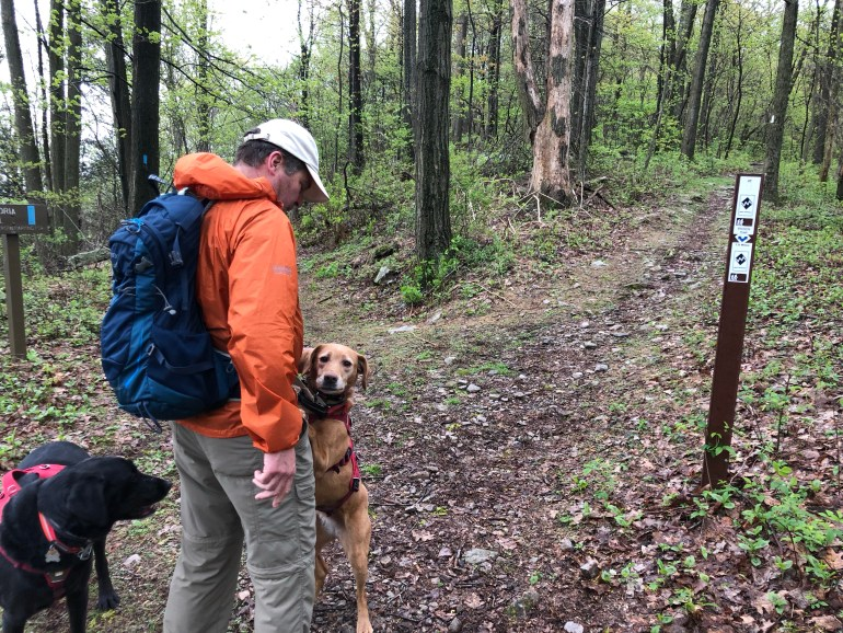 A brown dog standing on hind legs and leaning on a man wearing a backpack.