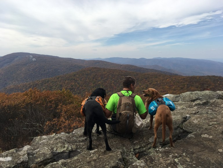 Male hiker and 2 backpack dogs sitting on the edge of a rock face, looking at the fall colored mountains in the distance.