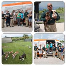 Animal Refuge League Maine