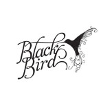 blackbird bar and grill brisbane spacecubed design studio