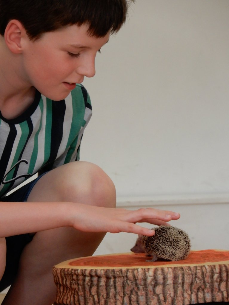 Boy stroking a hedgehog at SPACE's Ranger Stu event