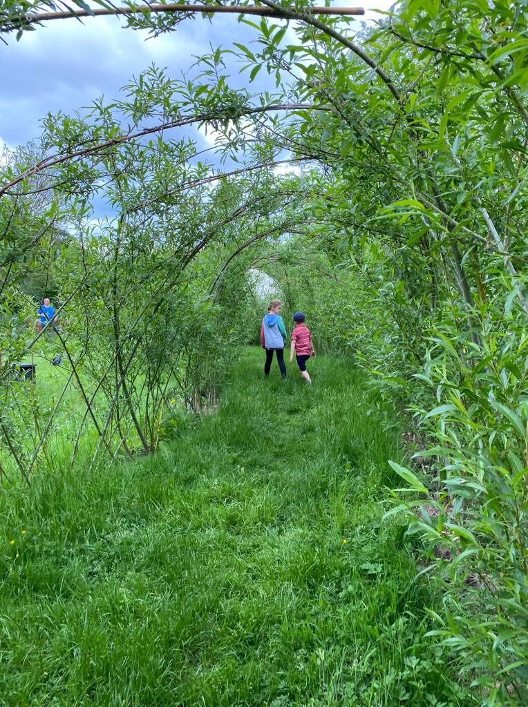 Two children running through a willow tunnel