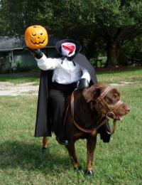 more Halloween costumes for dogs ...