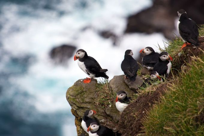 See Puffins on an 8 day Faroe Islands self drive with Best Served Scandinavia