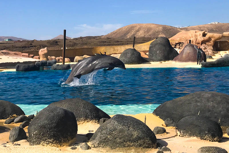 The dolphins at Rancho Texas Lanzarote Park seem happy, and well maintained.