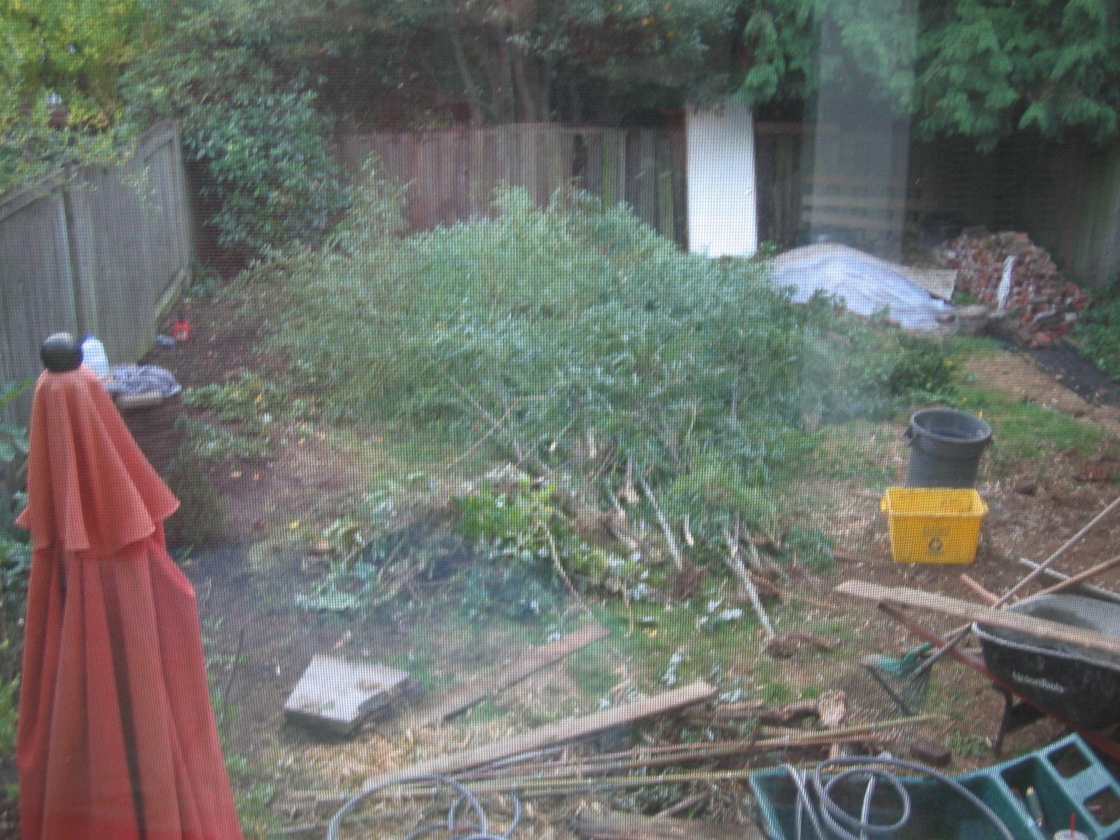 consruction debris in backyard