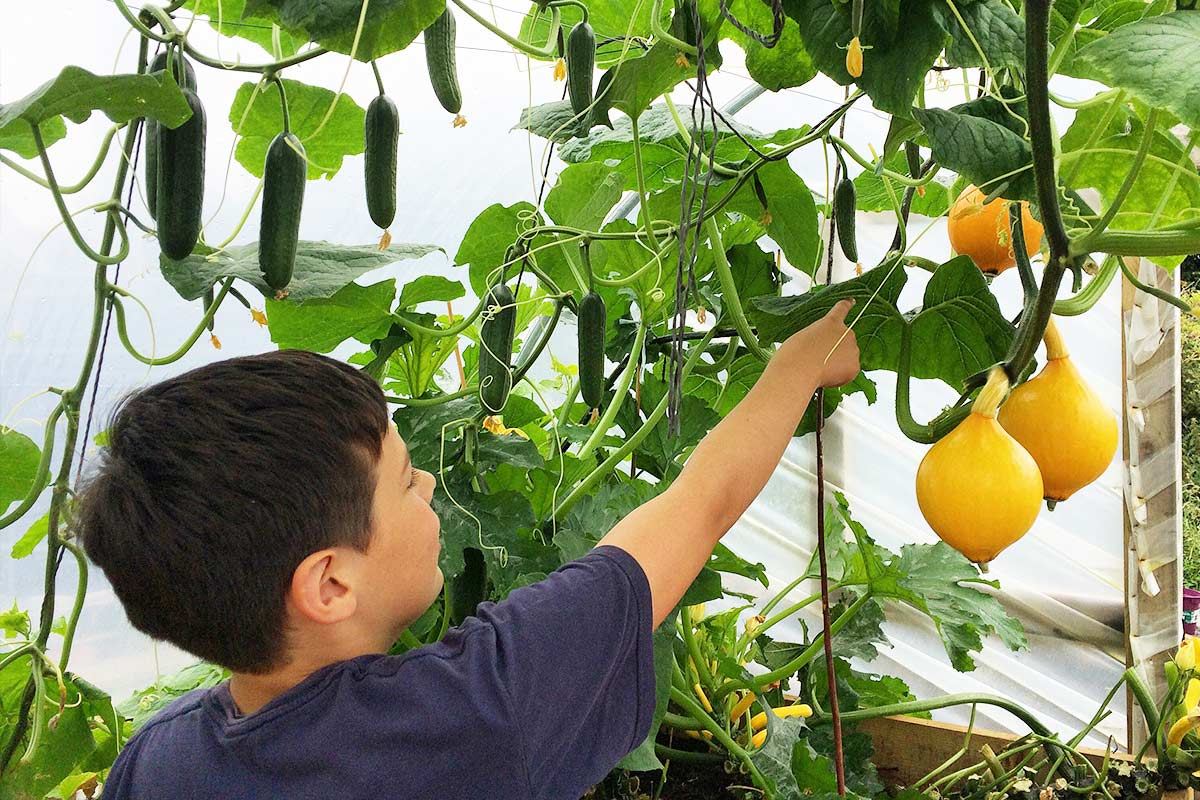 Organic & Sustainable | Homeschooling Garden Project