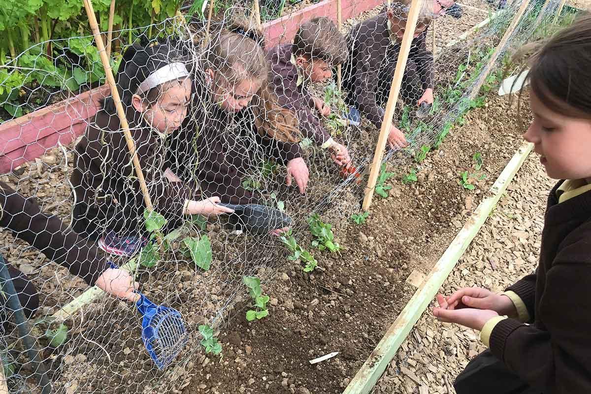 Social Ursula | Primary School Garden Group