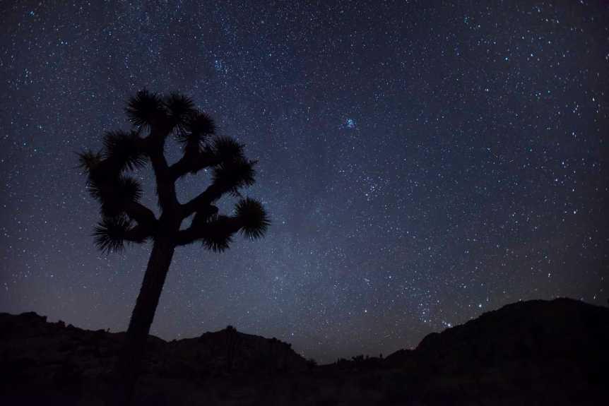 Stargazing in Joshua Tree National Park - NPS/Hannah Schwalbe