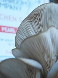 espresso mushroom oyster
