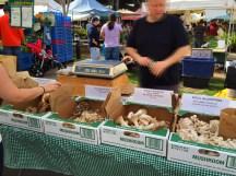 Wide variety of mushrooms