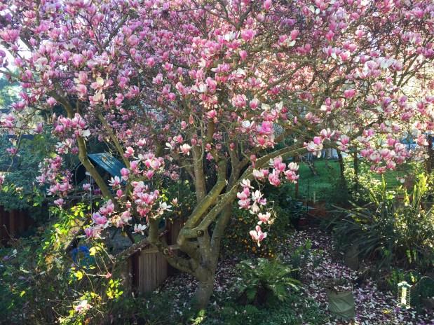 February – My Winter Garden