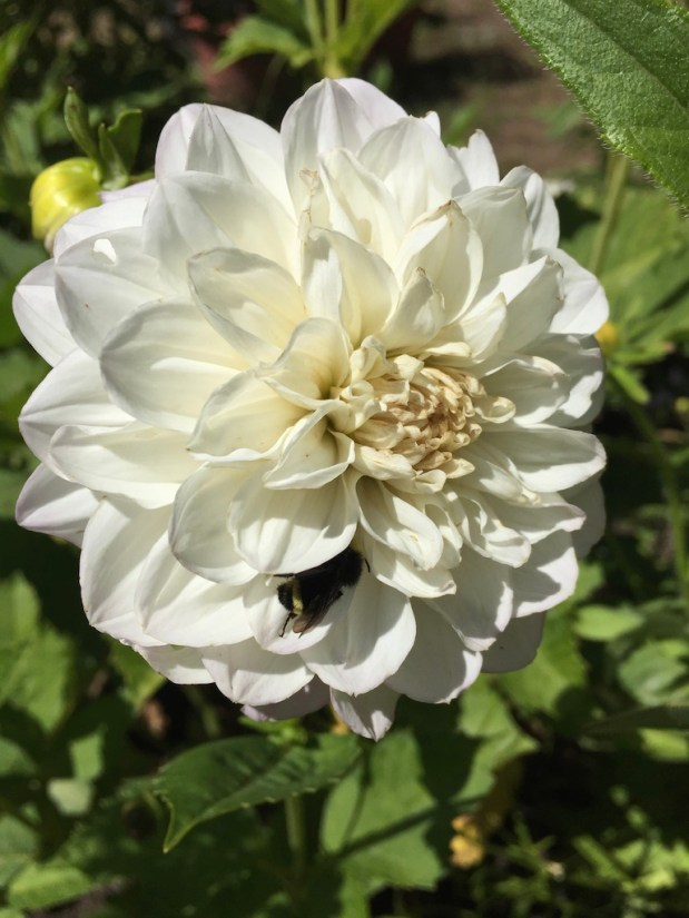 In My Garden – August 2019