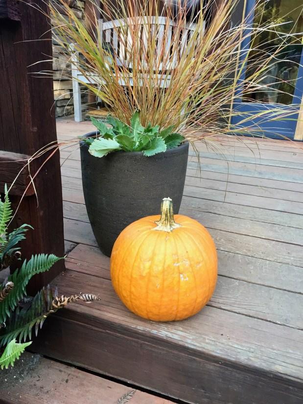 In My Garden – October 2019