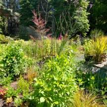July 2020 Back Garden