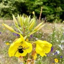 July 2020 Pollinator Garden