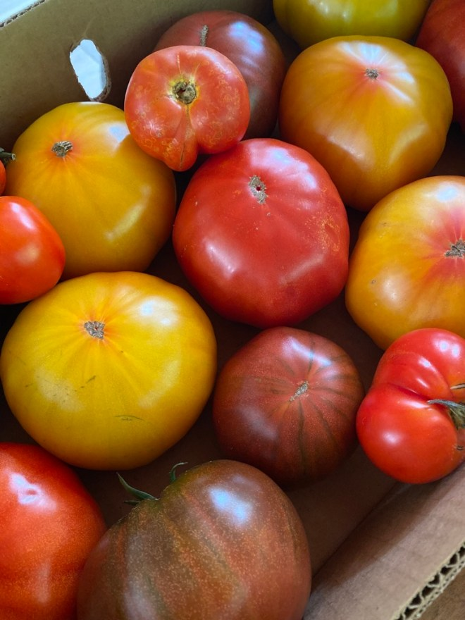 Nye Ranch heirloom beefsteak tomatoes
