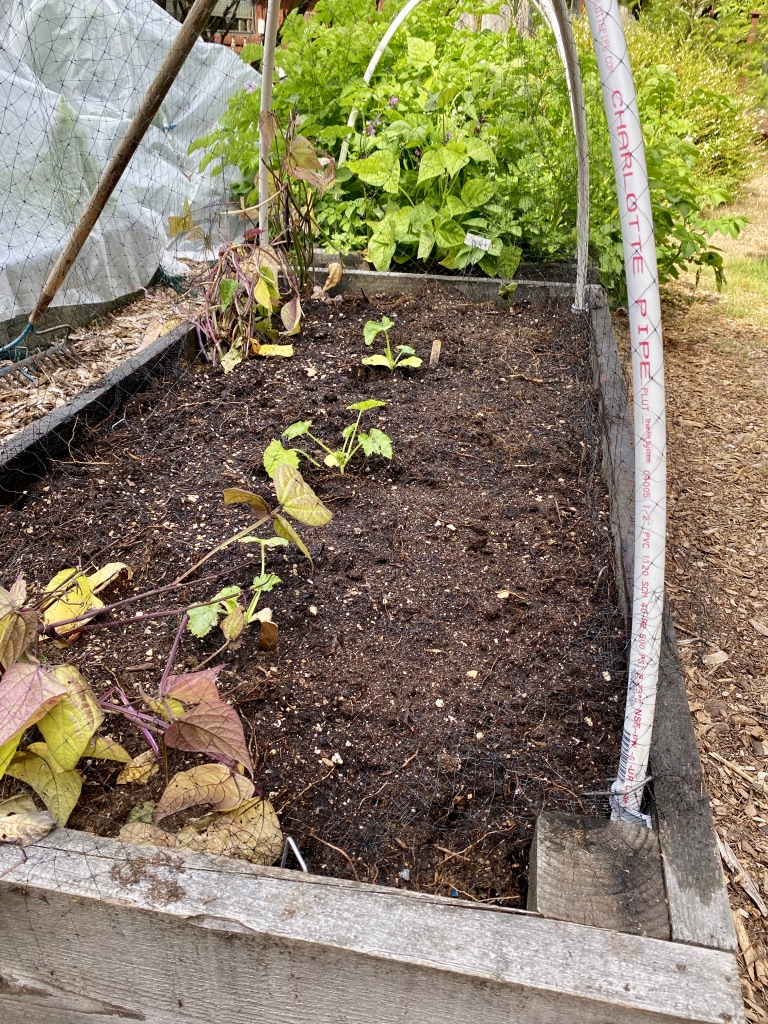 Vegetable bed with baby squash, beans and arugula