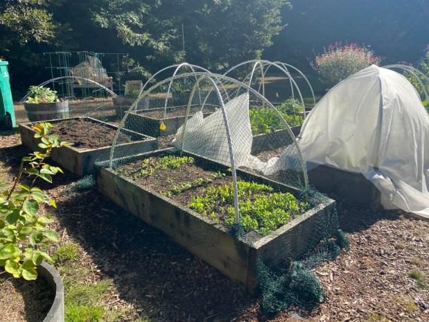 In My Garden – November 2020