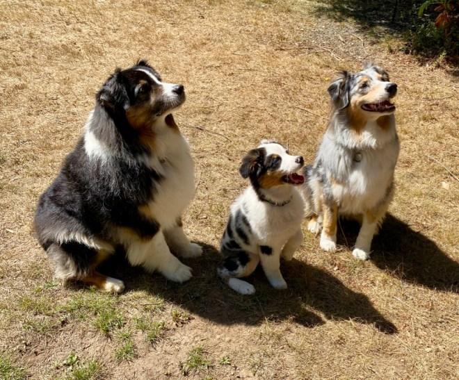 Casey, puppy Shanna, and Quinn