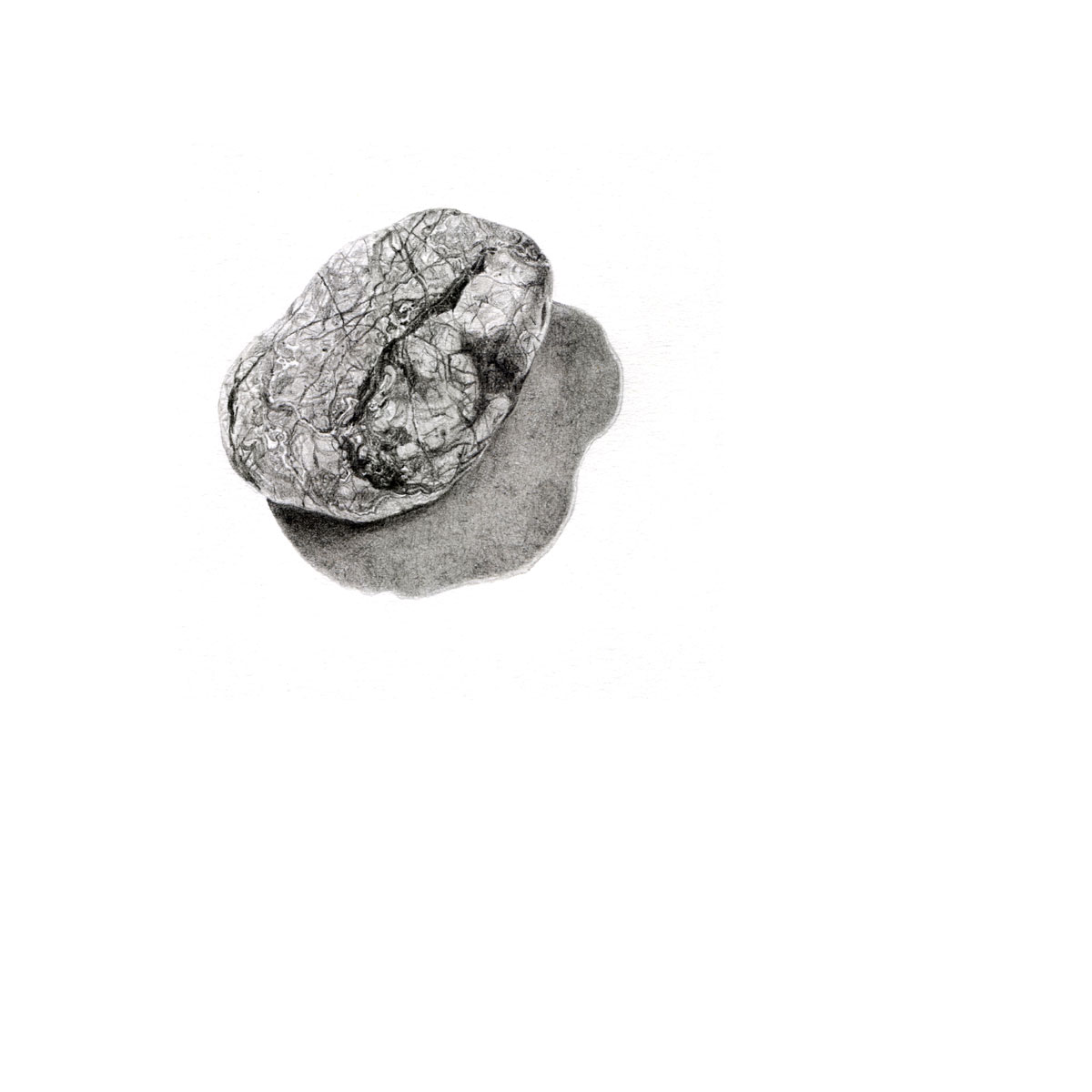 pencil drawing of lined pebble