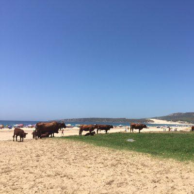 Playa de Bolonia en Cadiz
