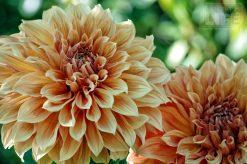 Butchart Gardens 36 Making A Life