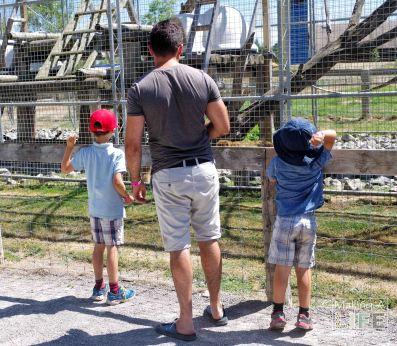 Feeding the Primates Safari Niagara