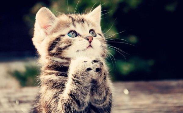 cat beg