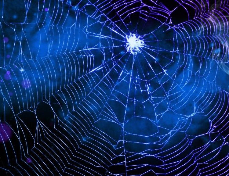spider-web-11