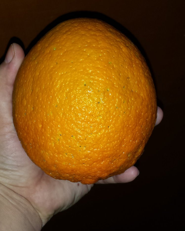 biggest orange 2