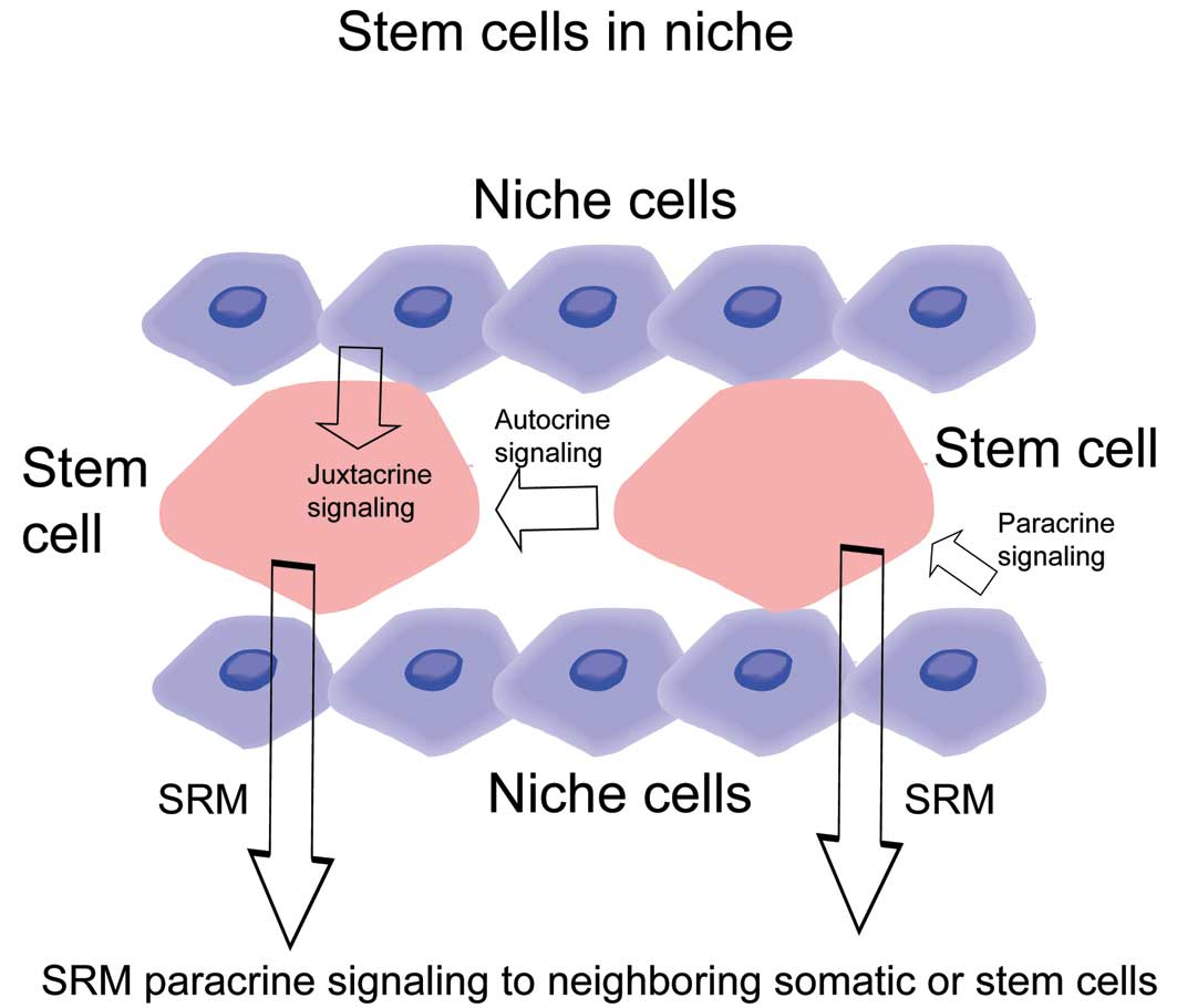 Enhancing Spontaneous Stem Cell Healing (review